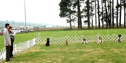 Dogshow2