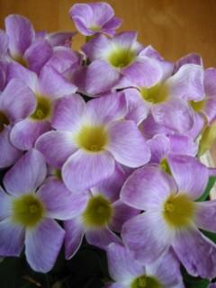 7575 O.p.Lavender & White3 [320x200]